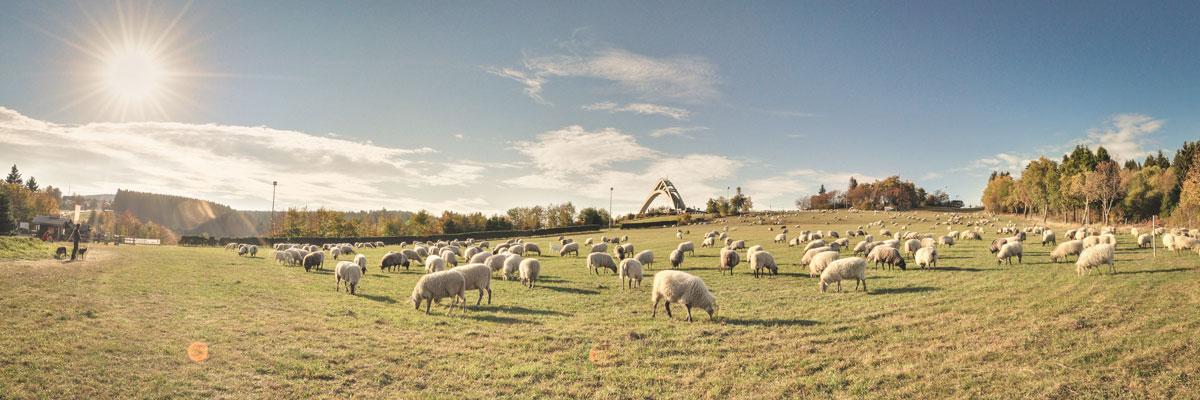 slider-schapen